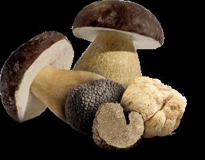 funghi-index